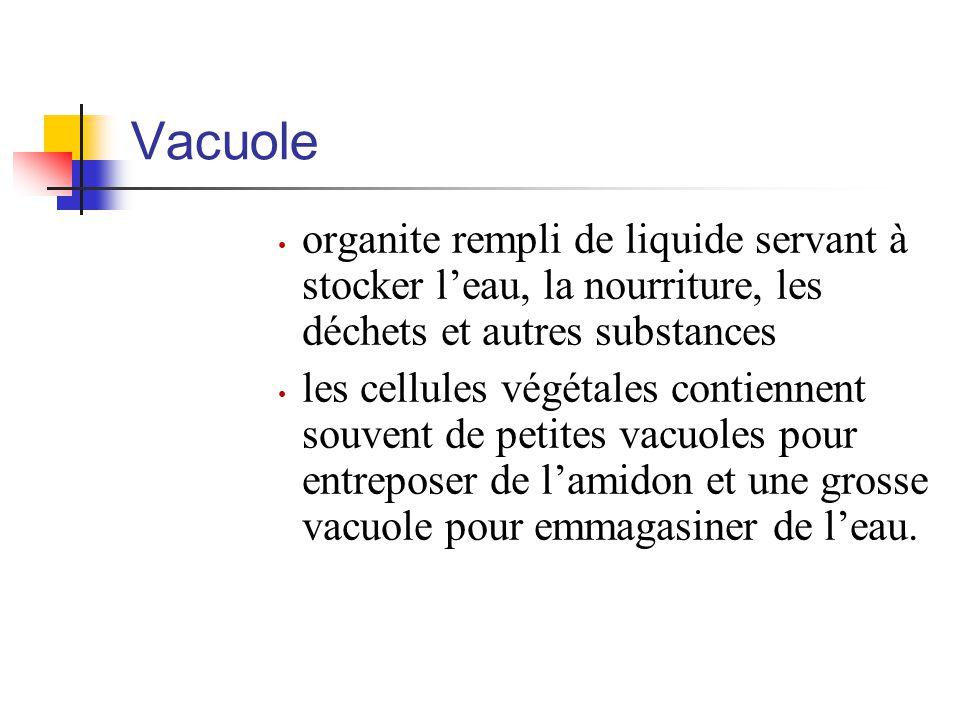 Vacuole organite rempli de liquide servant à stocker l'eau, la nourriture, les déchets et autres substances.