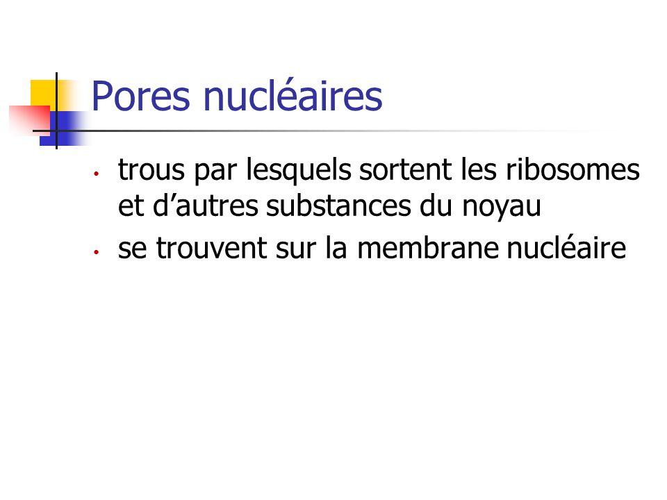 Pores nucléaires trous par lesquels sortent les ribosomes et d'autres substances du noyau.