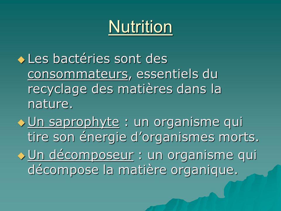 Nutrition Les bactéries sont des consommateurs, essentiels du recyclage des matières dans la nature.