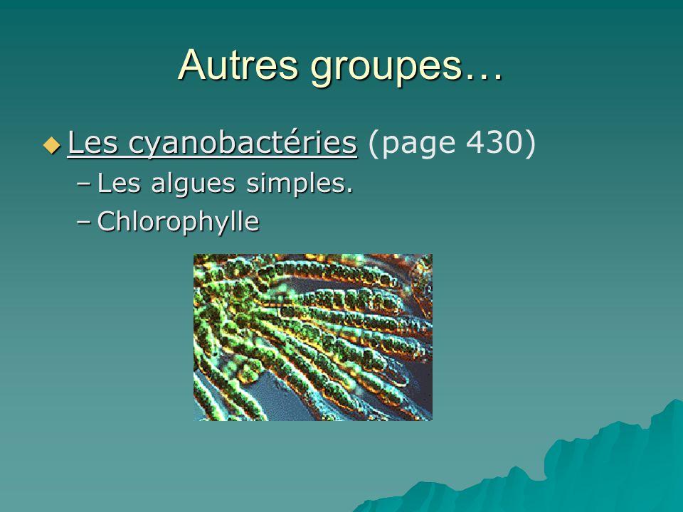 Autres groupes… Les cyanobactéries (page 430) Les algues simples.