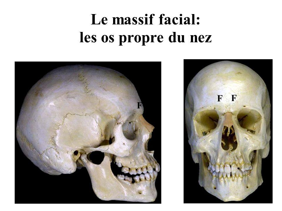 Le massif facial: les os propre du nez