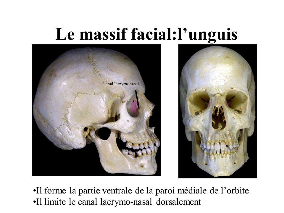 Le massif facial:l'unguis
