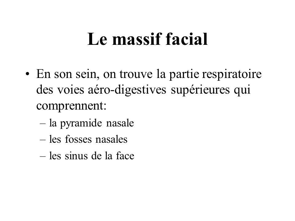 Le massif facial En son sein, on trouve la partie respiratoire des voies aéro-digestives supérieures qui comprennent: