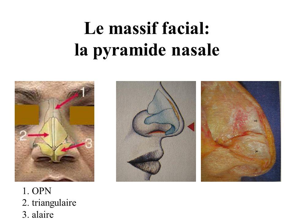 Le massif facial: la pyramide nasale