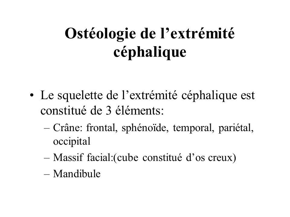 Ostéologie de l'extrémité céphalique