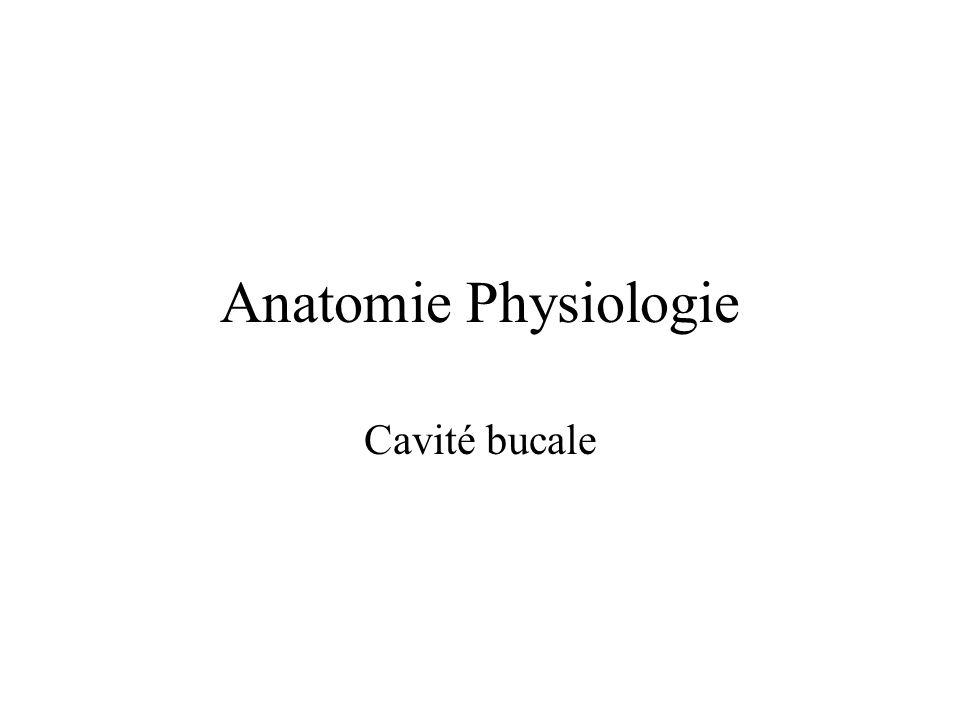 Anatomie Physiologie Cavité bucale