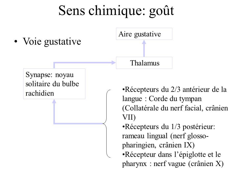 Sens chimique: goût Voie gustative Aire gustative Thalamus