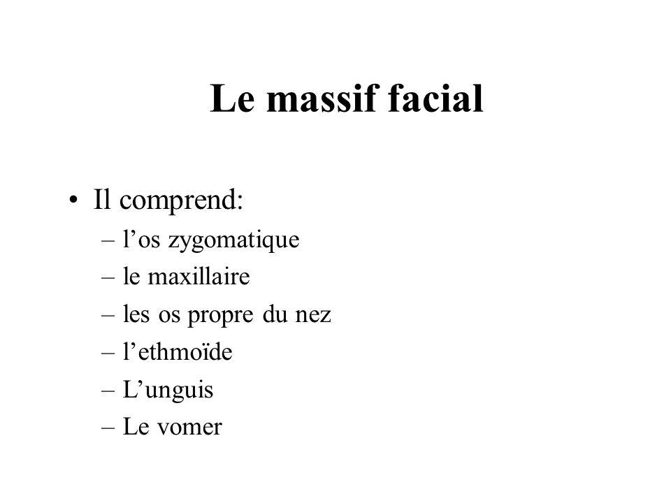Le massif facial Il comprend: l'os zygomatique le maxillaire