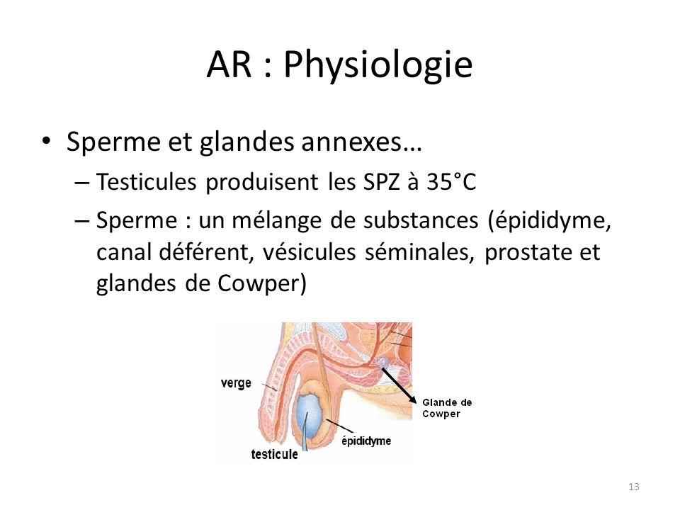 AR : Physiologie Sperme et glandes annexes…