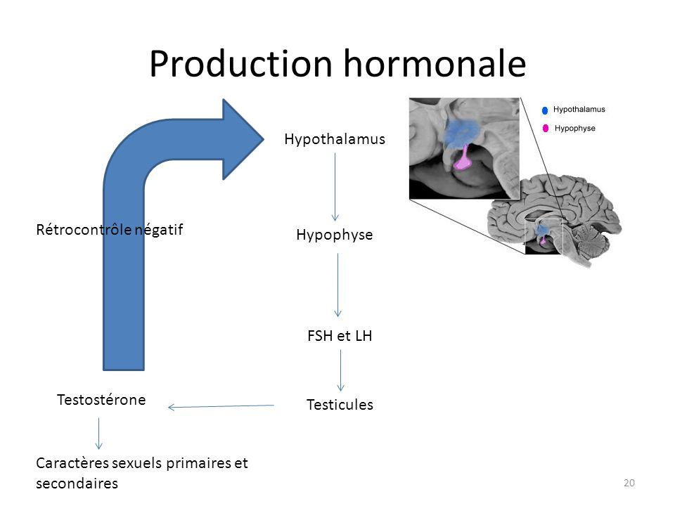 Production hormonale Hypothalamus Rétrocontrôle négatif Hypophyse