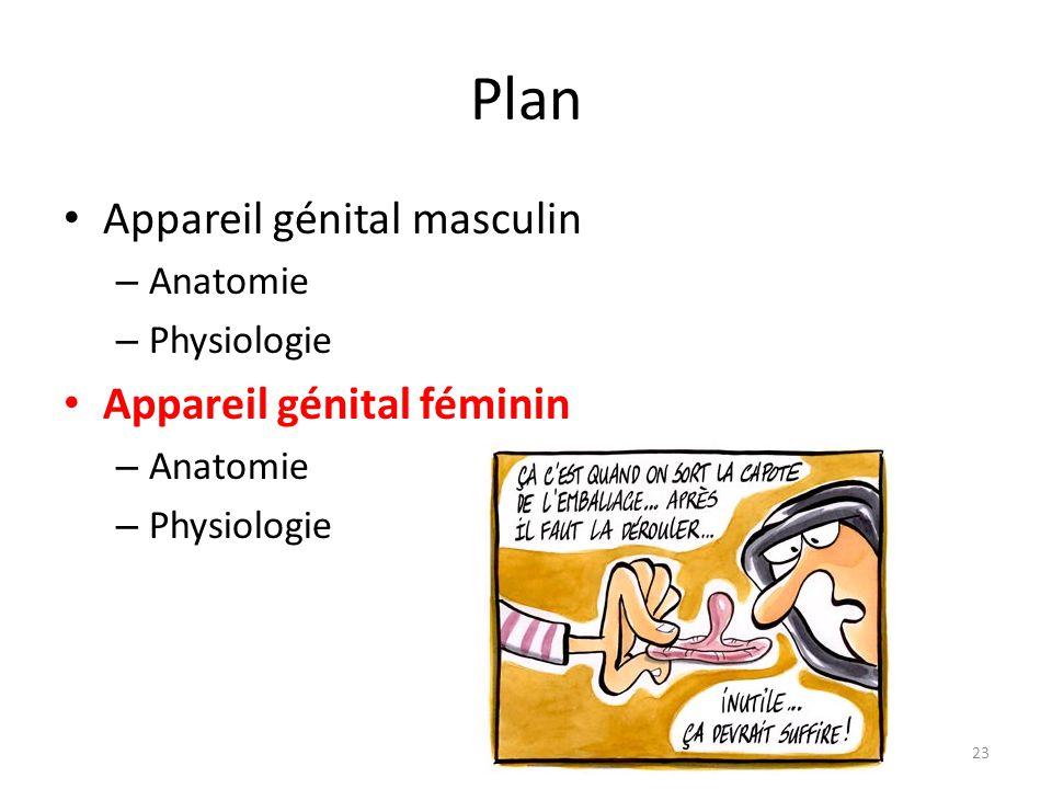 Plan Appareil génital masculin Appareil génital féminin Anatomie