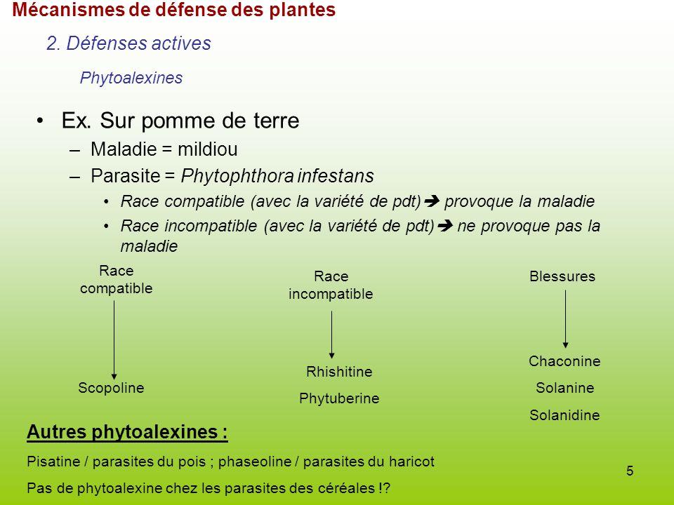 Sameh selim biochimie biologie mol culaire et cellulaire ppt video online t l charger - Race de pomme de terre ...