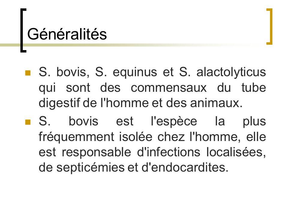 Généralités S. bovis, S. equinus et S. alactolyticus qui sont des commensaux du tube digestif de l homme et des animaux.
