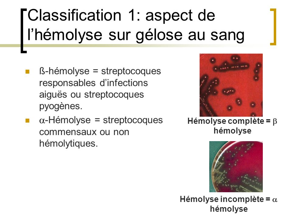 Classification 1: aspect de l'hémolyse sur gélose au sang