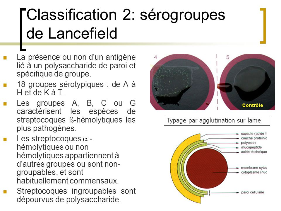 Classification 2: sérogroupes de Lancefield
