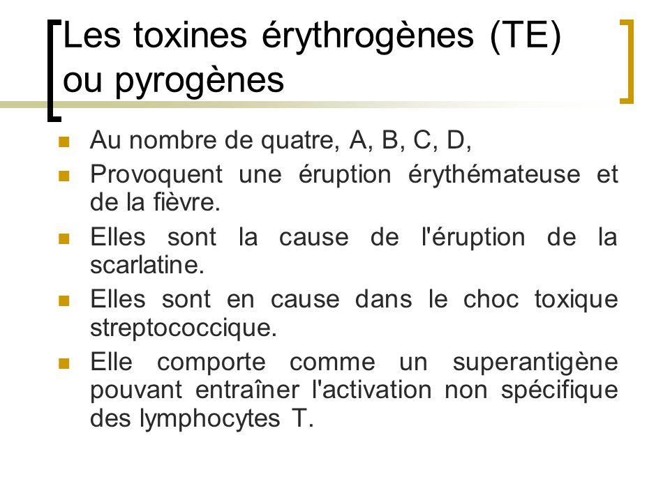 Les toxines érythrogènes (TE) ou pyrogènes