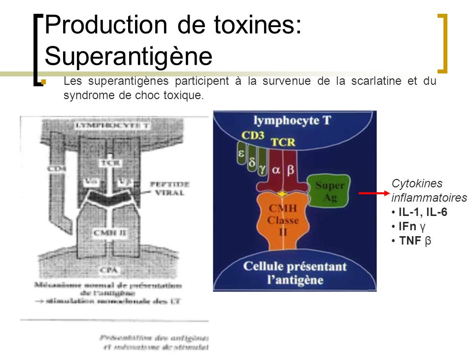 Production de toxines: Superantigène
