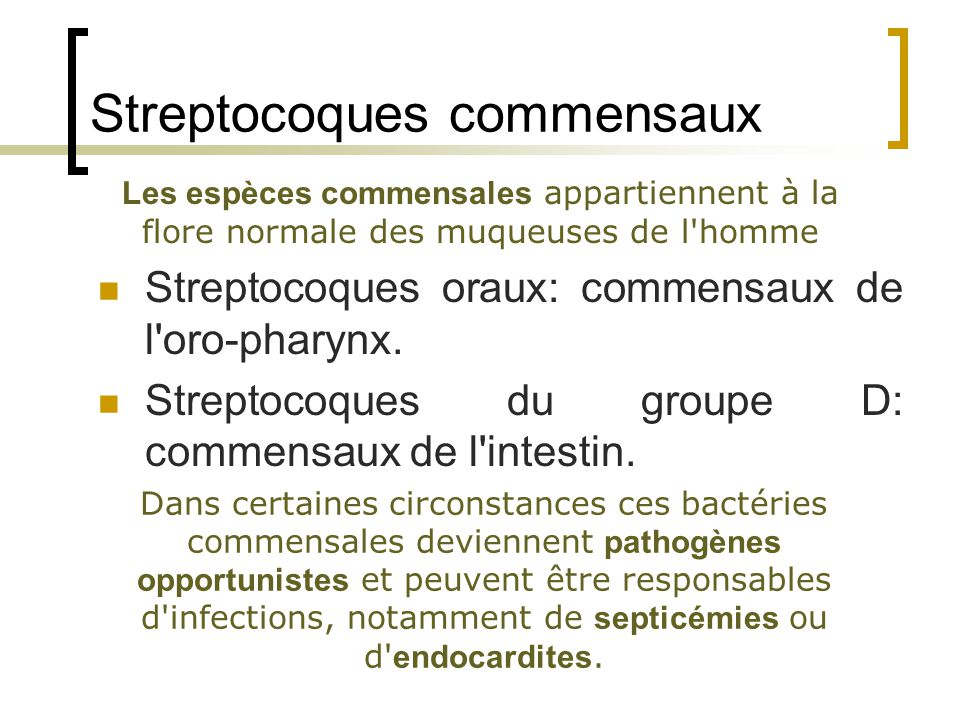 Streptocoques commensaux