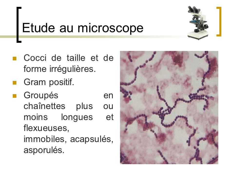 Etude au microscope Cocci de taille et de forme irrégulières.