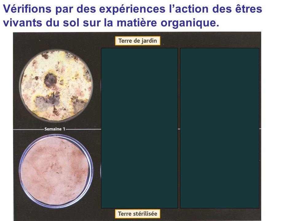Vérifions par des expériences l'action des êtres vivants du sol sur la matière organique.