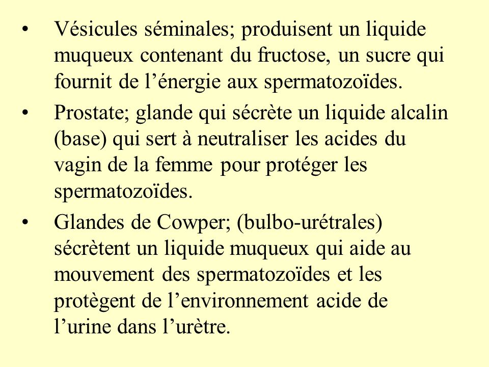 Vésicules séminales; produisent un liquide muqueux contenant du fructose, un sucre qui fournit de l'énergie aux spermatozoïdes.