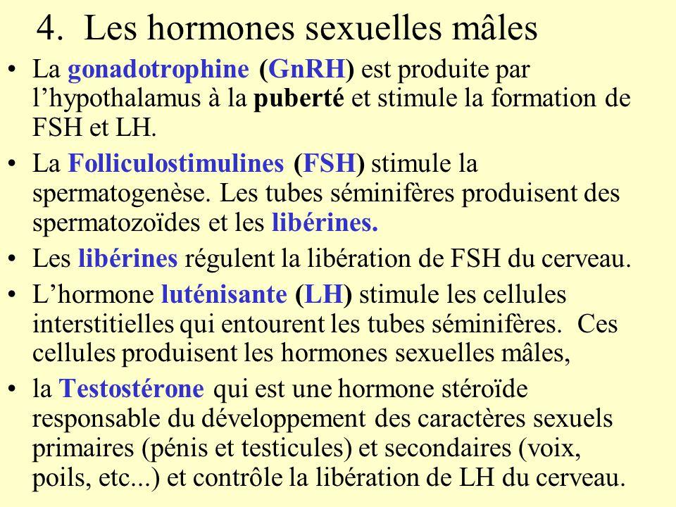 4. Les hormones sexuelles mâles