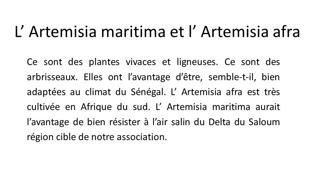 Les plantes du genre artemisia ppt video online t l charger - Association plantes aromatiques entre elles ...