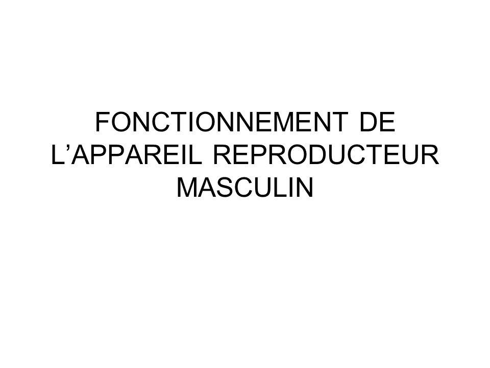 FONCTIONNEMENT DE L'APPAREIL REPRODUCTEUR MASCULIN