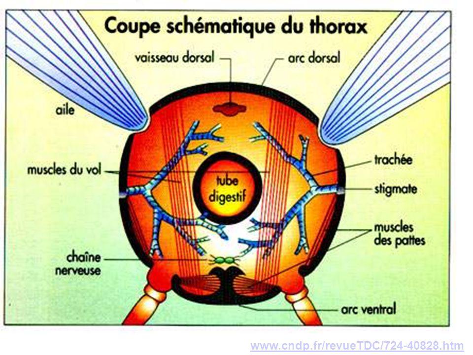 www.cndp.fr/revueTDC/724-40828.htm