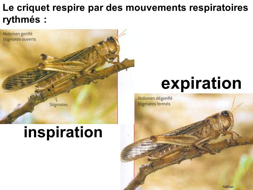 expiration inspiration
