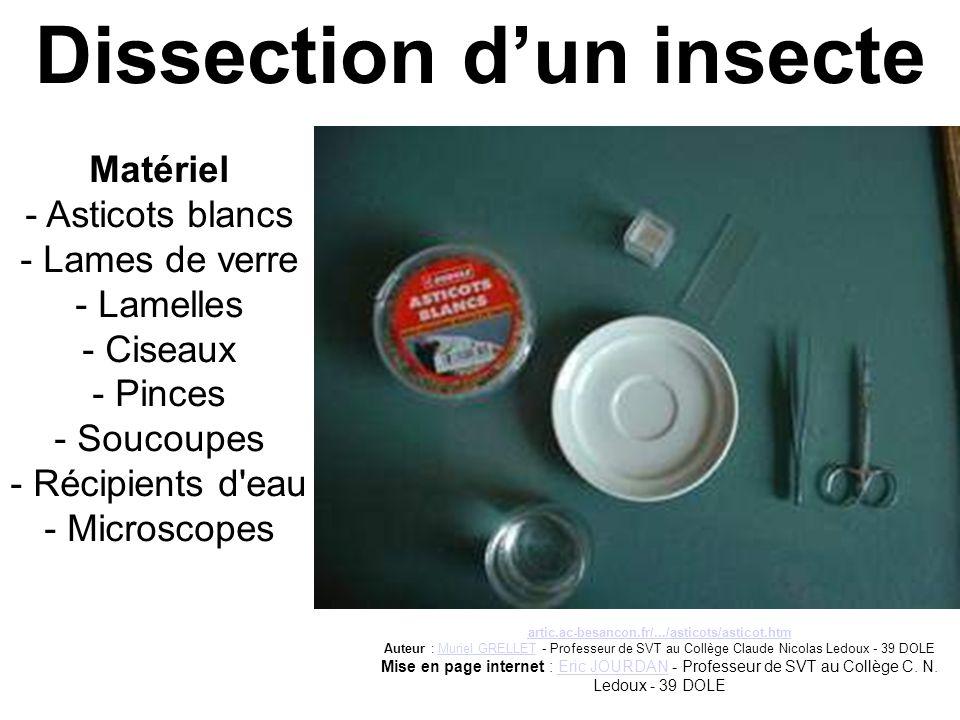 Dissection d'un insecte