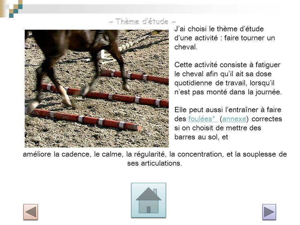 ~ Thème d'étude ~ J'ai choisi le thème d'étude d'une activité : faire tourner un cheval.