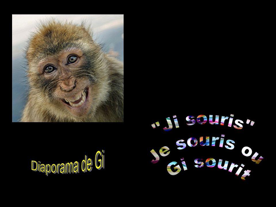Diaporama de Gi Ji souris Je souris ou Gi sourit