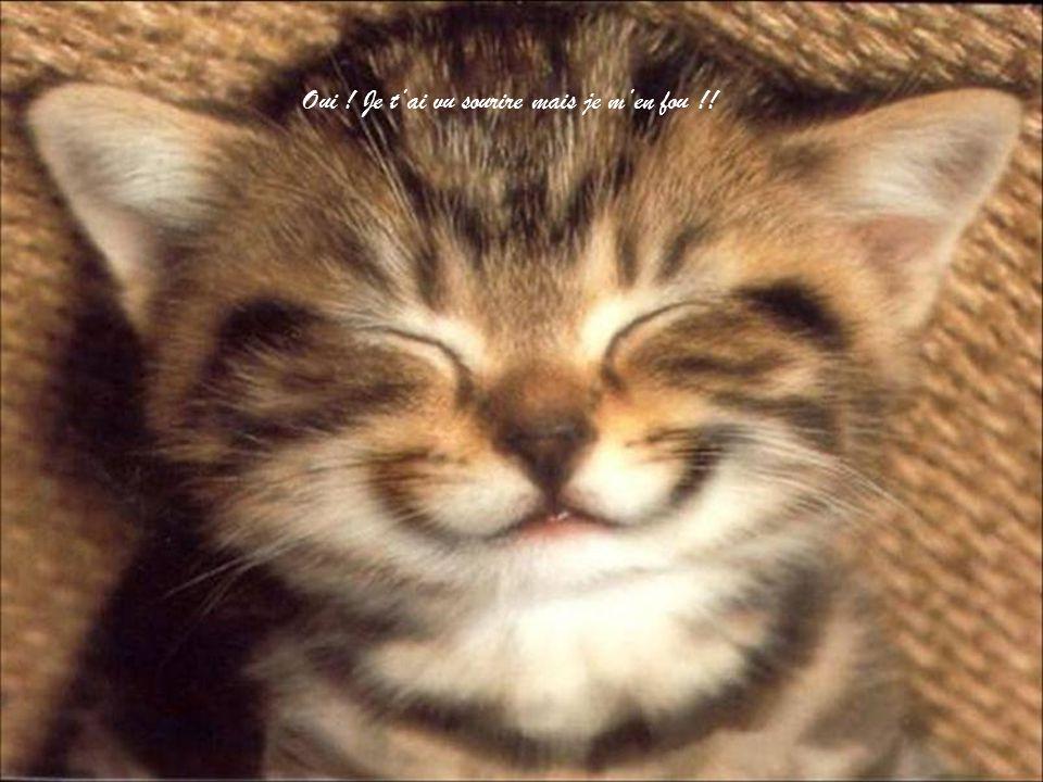 Oui ! Je t'ai vu sourire mais je m'en fou !!
