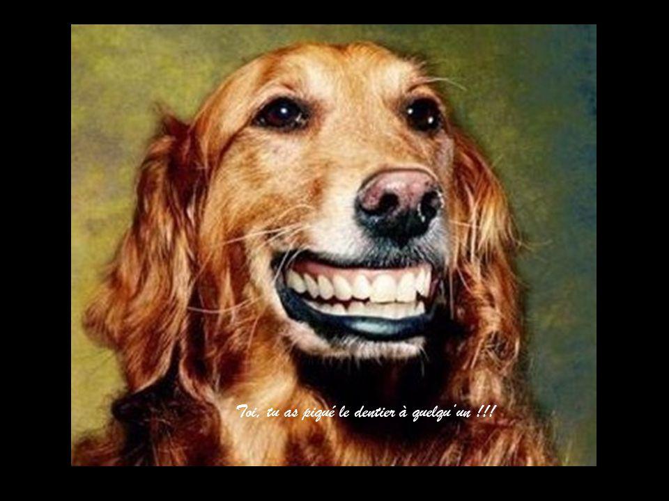 Toi, tu as piqué le dentier à quelqu'un !!!