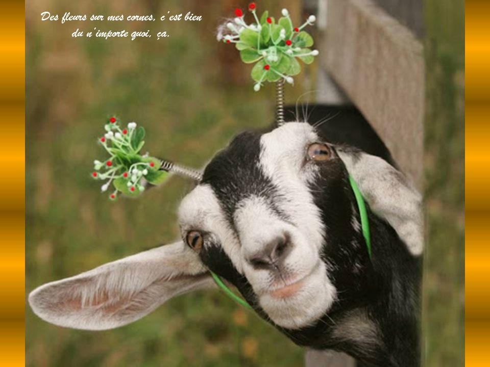 Des fleurs sur mes cornes, c'est bien du n'importe quoi, ça.