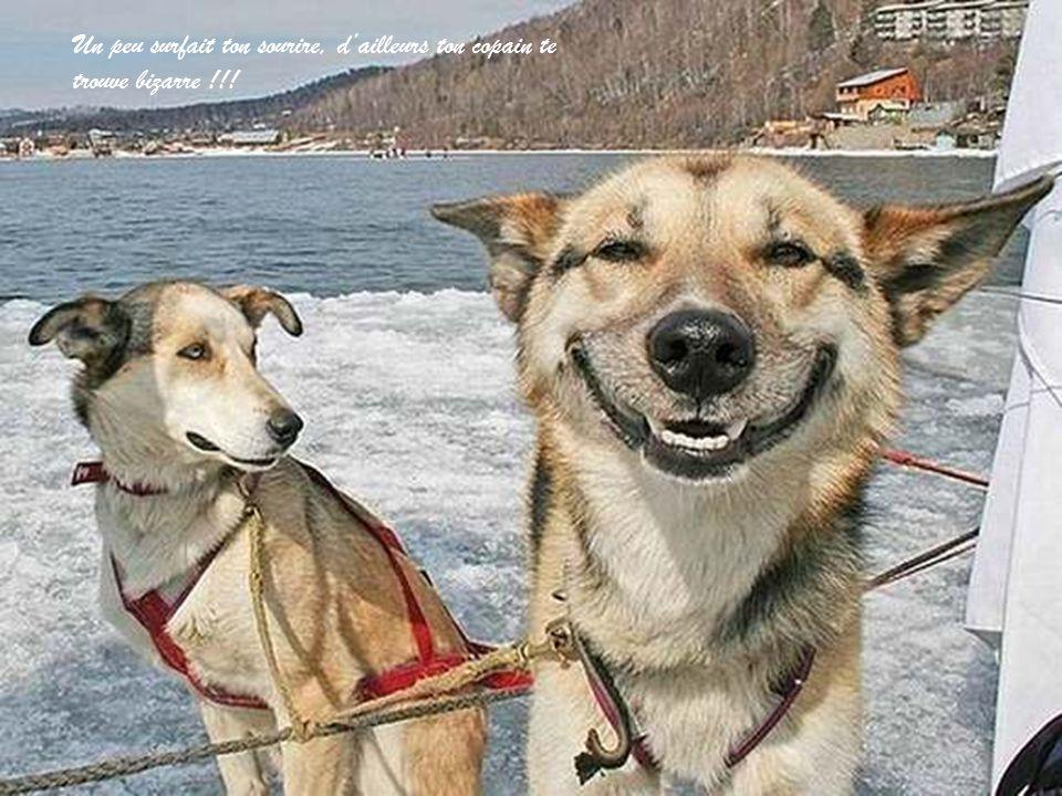 Un peu surfait ton sourire, d'ailleurs ton copain te trouve bizarre !!!