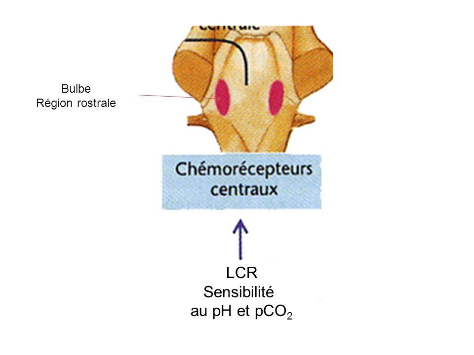 téléchargement de l'origine du tractus spinocérébelleux ventral