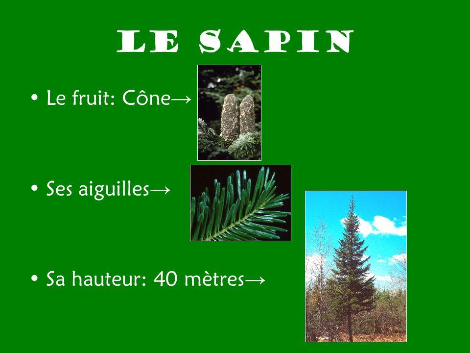Les arbres qui t entourent ppt t l charger - Sapin qui perd pas ses aiguilles ...