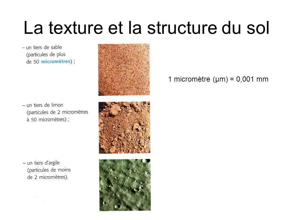 La texture et la structure du sol