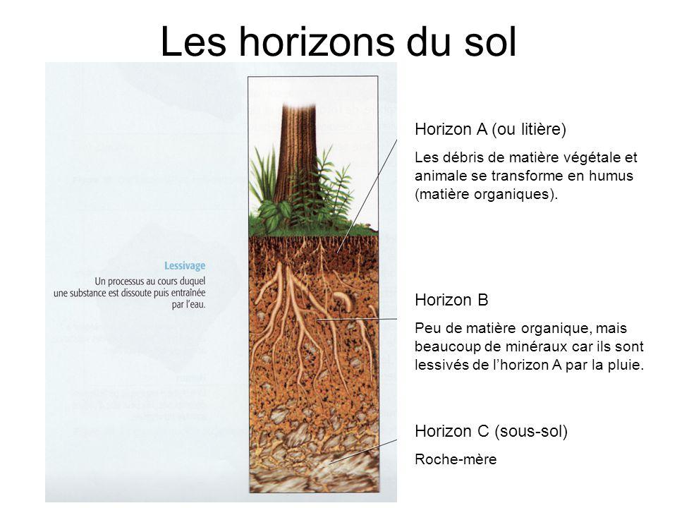 Les horizons du sol Horizon A (ou litière) Horizon B