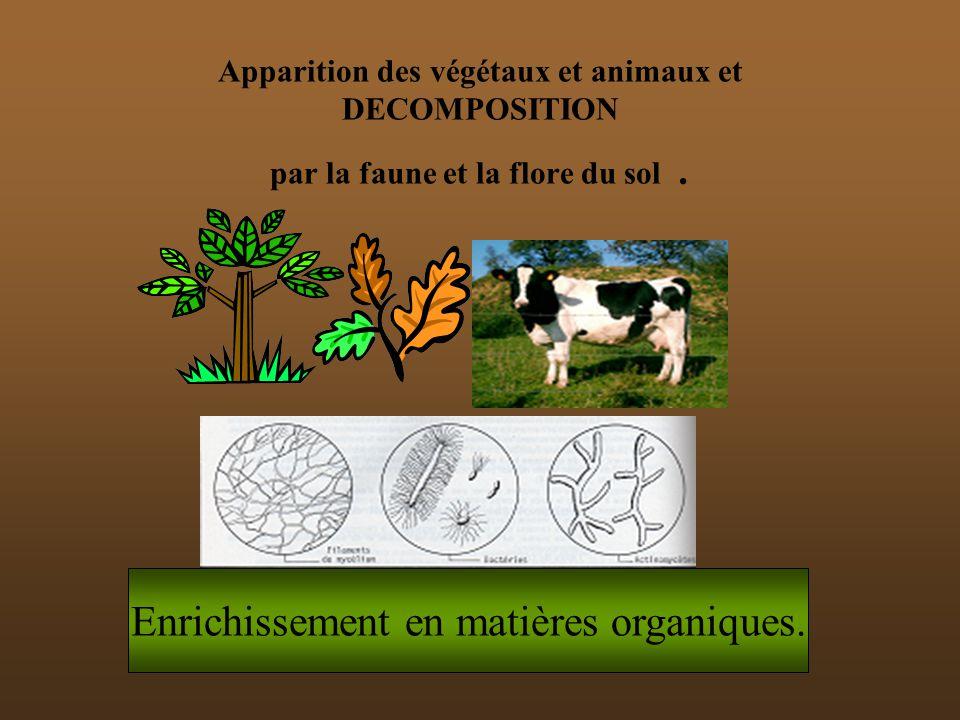 Enrichissement en matières organiques.