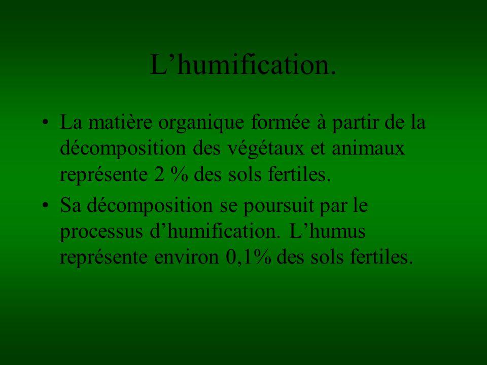 L'humification. La matière organique formée à partir de la décomposition des végétaux et animaux représente 2 % des sols fertiles.