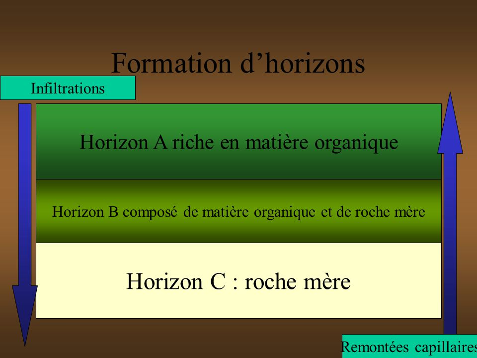 Formation d'horizons Horizon C : roche mère