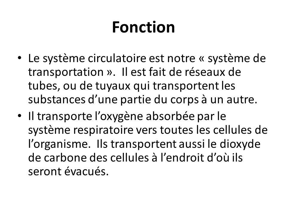 Fonction