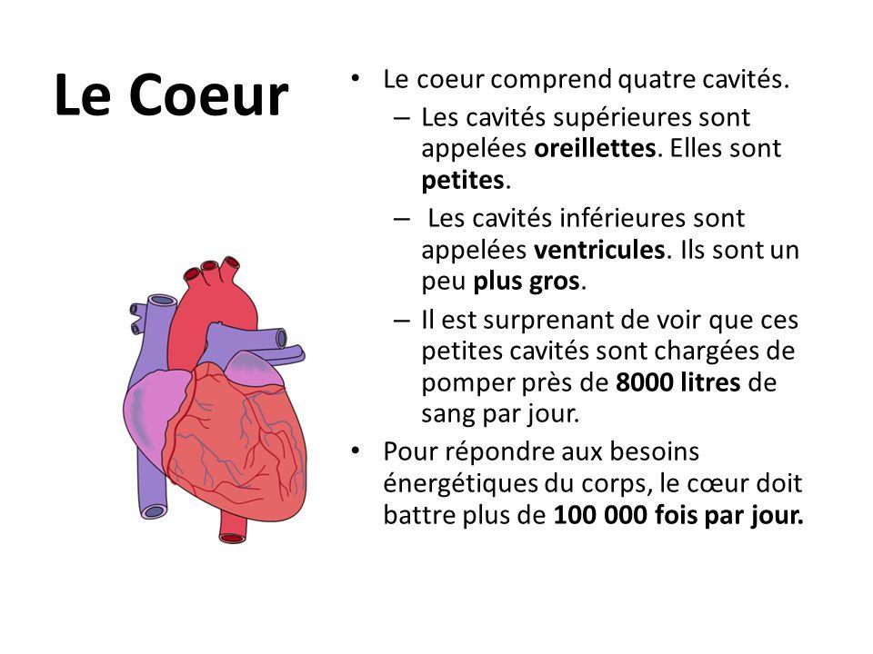 Le Coeur Le coeur comprend quatre cavités.