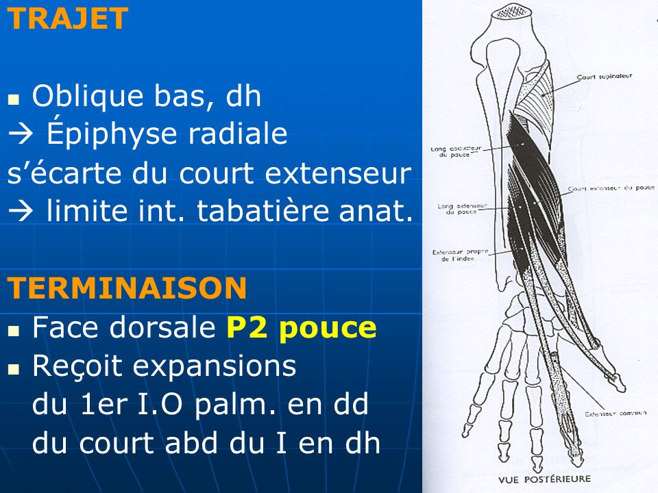 Fantastisch Hesi A2 Anatomie Und Physiologie Studienführer Fotos ...