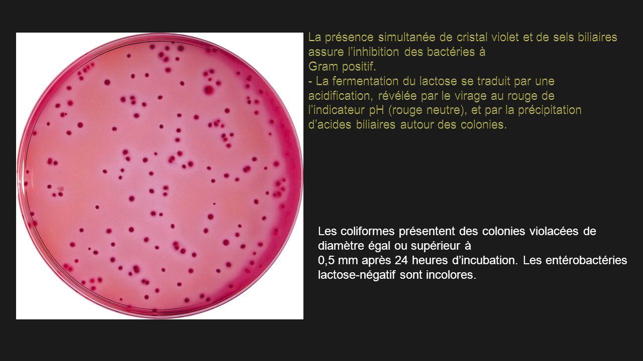 La présence simultanée de cristal violet et de sels biliaires assure l'inhibition des bactéries à