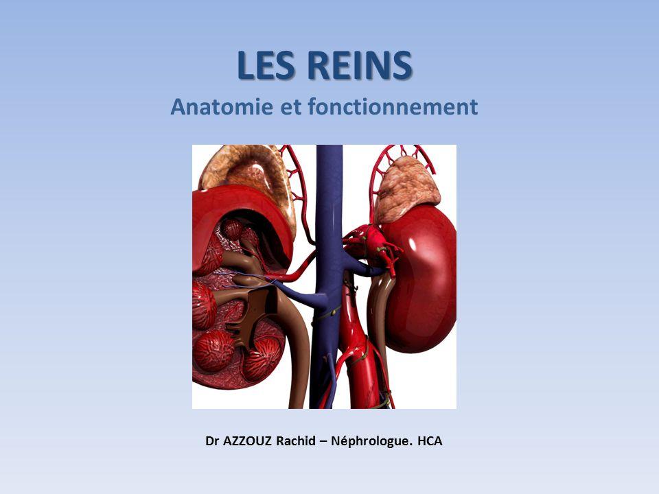 Anatomie et fonctionnement Dr AZZOUZ Rachid – Néphrologue. HCA