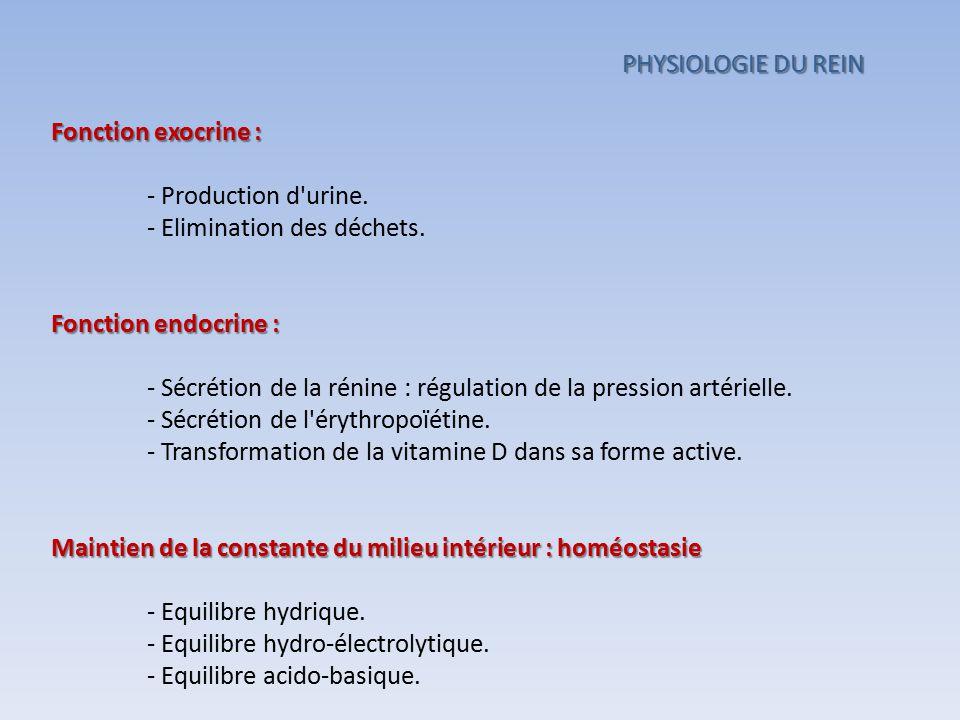 PHYSIOLOGIE DU REIN Fonction exocrine : - Production d urine. - Elimination des déchets. Fonction endocrine :